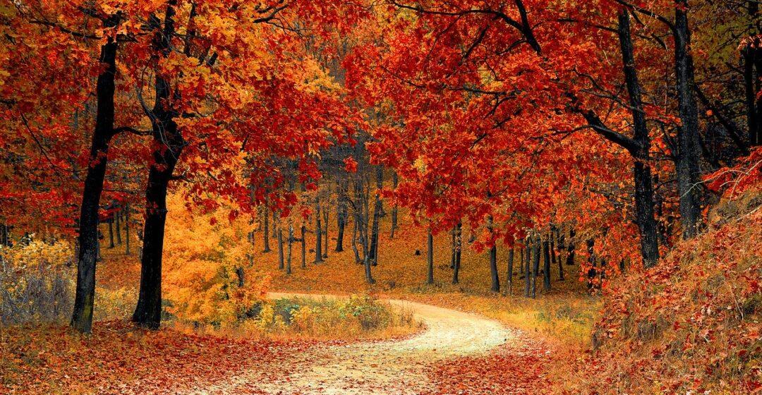 fall, scenery